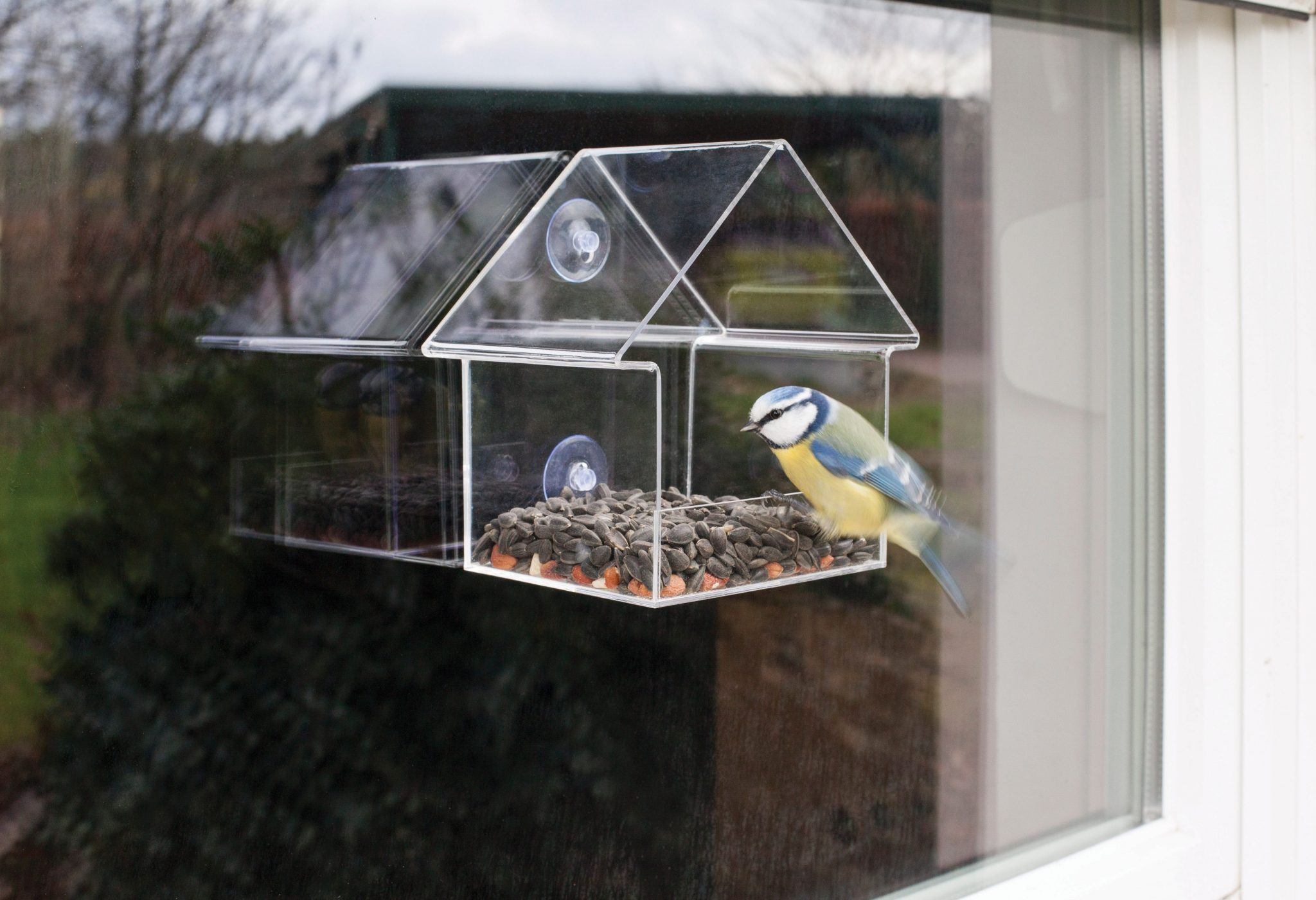 feeders i view nature products best anywhere birds acrylic bird feeder side window cardinal