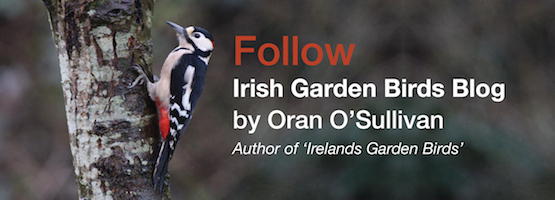 Follow-Irish-Garden-Birds-Oran-O'Sullivan