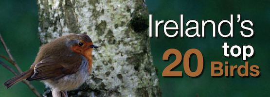 Irelands-Top-20-Birds