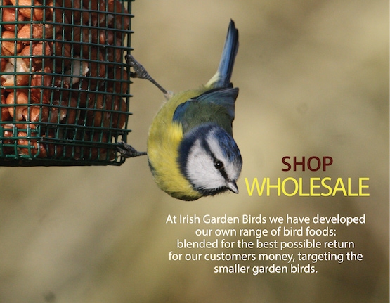 Shop-wholesale-at-Irish-Garden-Birds